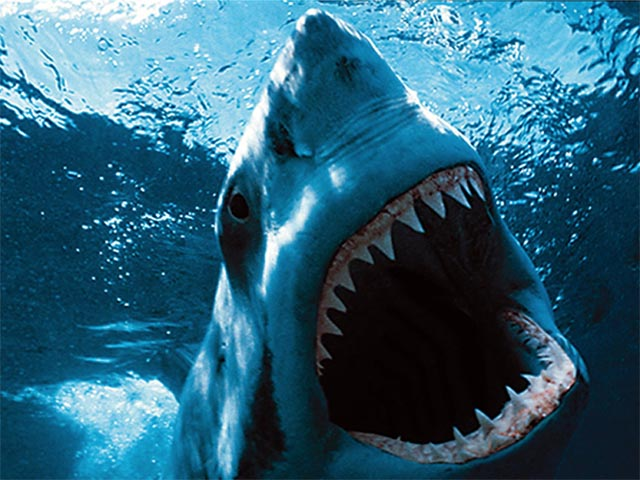 great white shark wallpaper and backgrounds 640 x 480