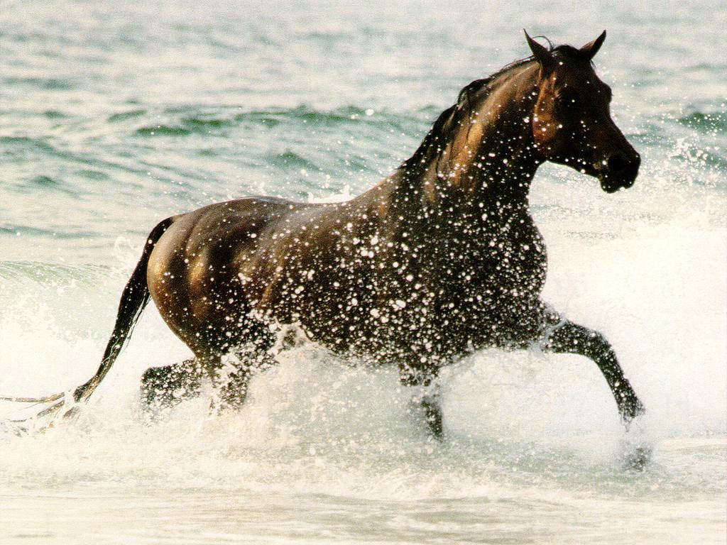 Horse in the Surf wallpaper