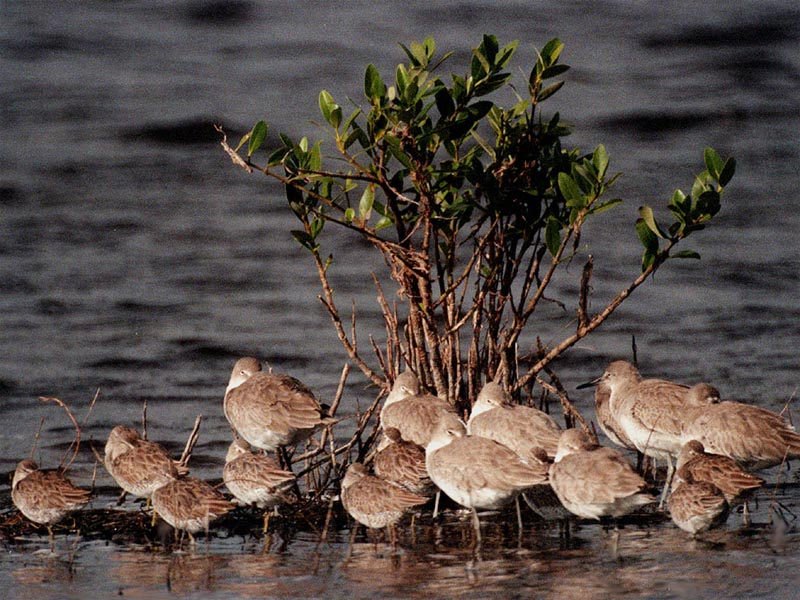 Willets wallpaper