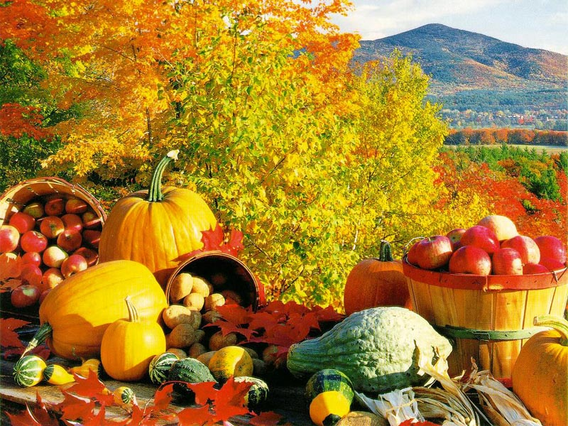 Fall Harvest Wallpaper and Backgrounds (800 x 600) - DeskPicture.