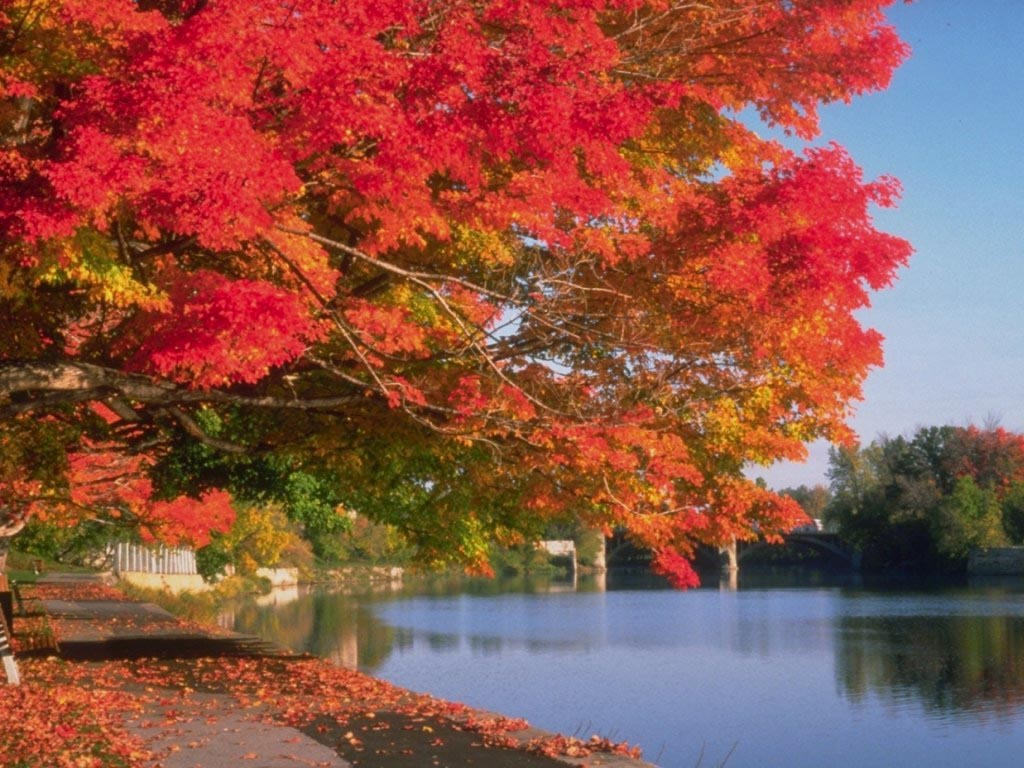 fall leaves by a pond