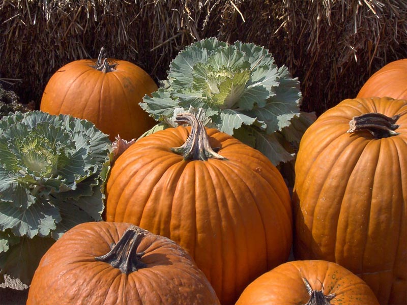 Pumpkins and Kale wallpaper