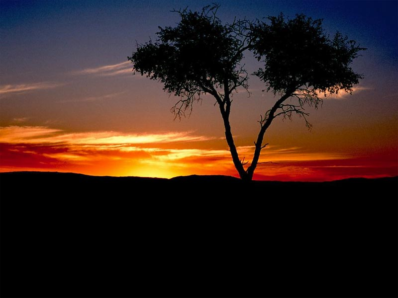 Sunset with Tree II wallpaper